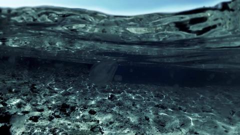 Small jellyfish floating under water. Warterline shot Footage