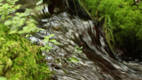 continuous stream of crystal clear water of a forest stream Live Action
