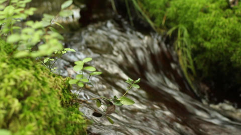 continuous stream of crystal clear water of a forest stream, Live Action