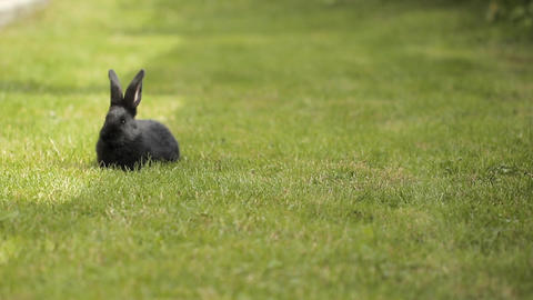 Black Rabbit On Green Grass ビデオ