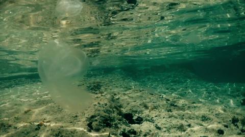 Jellyfish floating under water. Underwater shot Footage