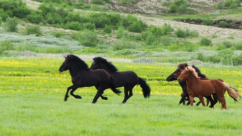 Horses running in the meadow Footage