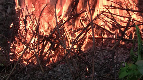 Big pile of dry twigs burning. A big fire red. Fire burns... Stock Video Footage