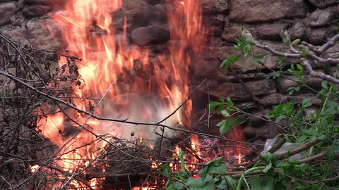 Fire burning near an old stone wall covered with vegetation. Dry twigs burning,  Footage