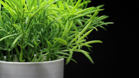 Green Plant Grass in a White Pot Rotating Footage