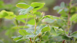 Branches with green leafs. Nature Footage