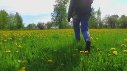 Girl hiker walking on beautiful field of dandelion flowers Footage
