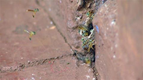 Wasps Nest Footage
