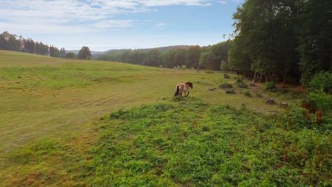 Majestic horse on the summer meadow Footage