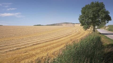 Wheat field after the harvest and plow Footage