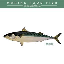 Seafood Vectors 1