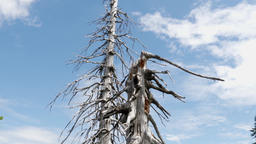Air pollution. Dead trees. Co2 and So2 emission. Acid rains Archivo