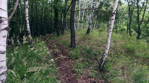 Walk through the green forest early summer on a meandering path 7 Footage