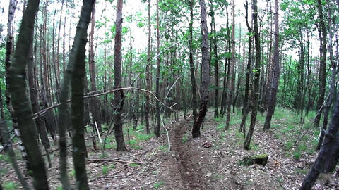 Walk through the green forest early summer on a meandering path 9 Footage