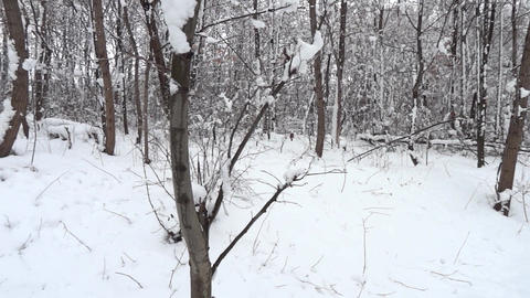 Winter landscape with snow fall off and falls from trees 15 Footage
