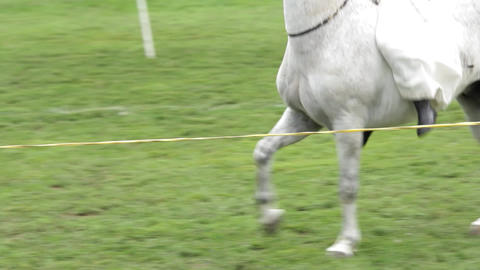 Young woman cares for and rides her beautiful white horse 1d Footage