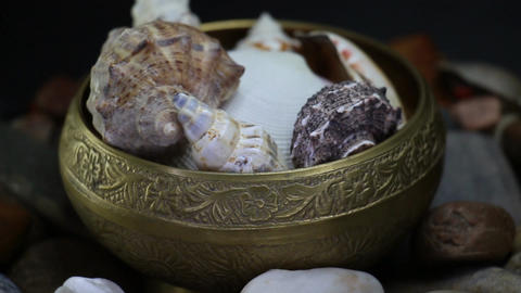 Sea Stones And Oyster Shells