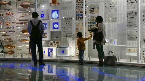 Family Father Mother Child Son Visiting Natural History Museum Tokyo Footage