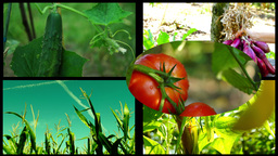 Collage vegetables. Concept of healthy eating and organic farming, 4k Footage