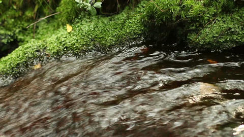 fast mountain stream among rocks overgrown with moss Footage