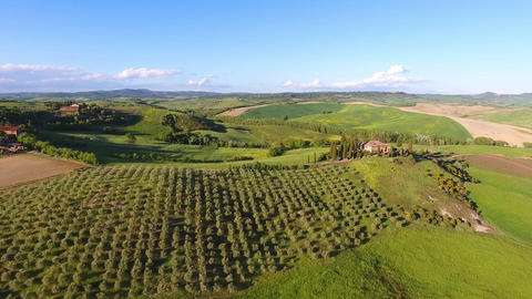 Tuscany aerial landscape with olive trees on hills Footage