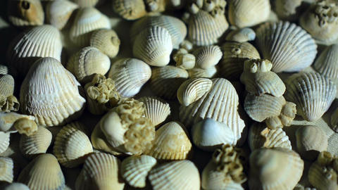 Little, beautiful sea shells with sand and back light, rotation, on black Footage