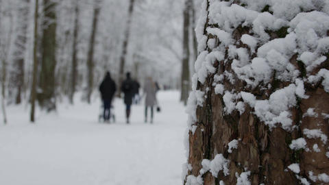 Winter park with snow covered trees, a family with children walking in the park Footage