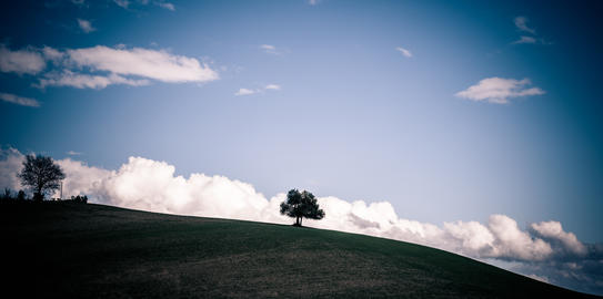 Tree alone on a hill in Tuscany Fotografía