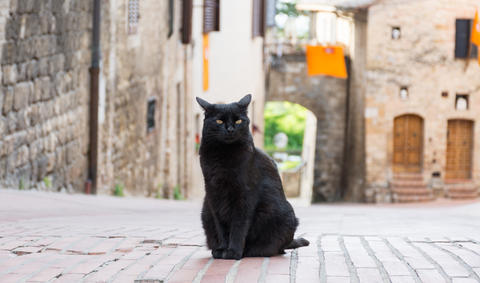 A black cat in the middle of a road Foto