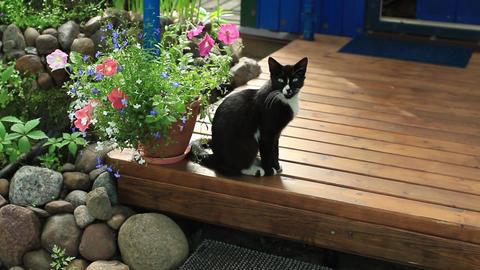 black domestic cat cat on a terrace Footage