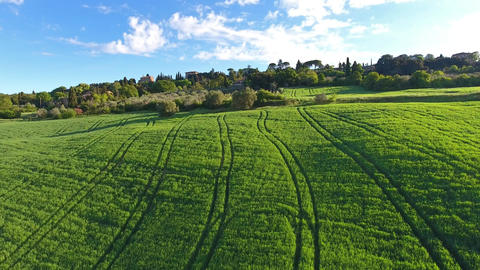 Tuscany aerial landscape with olive trees Footage