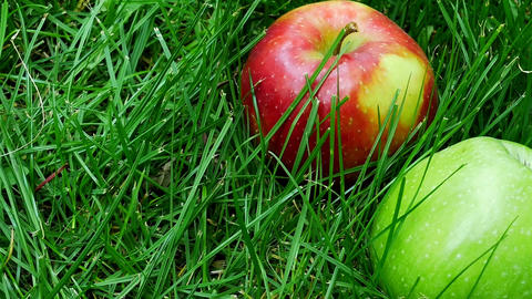 Red And Green Ripe Juicy Apples Scattered on the Green Grass Live Action