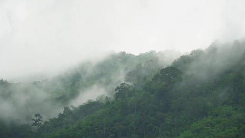 fog moving over green forest mountain in the morning Footage