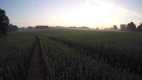 Summer mist over wheat fields and sunrise, time lapse Footage
