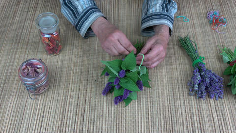 Senior woman herbalist hands binding anise hyssop bunch for dry on table Live Action