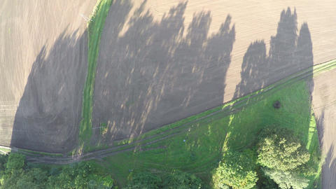 cultivated fields and trees shadows in morning, aerial view from drone ビデオ