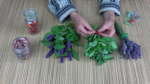 Senior woman herbalist hands binding fresh mint bunch Footage