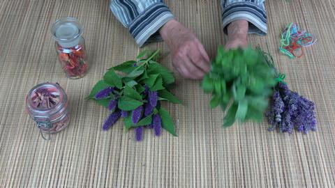 Senior woman herbalist hands binding fresh mint bunch Stock Video Footage