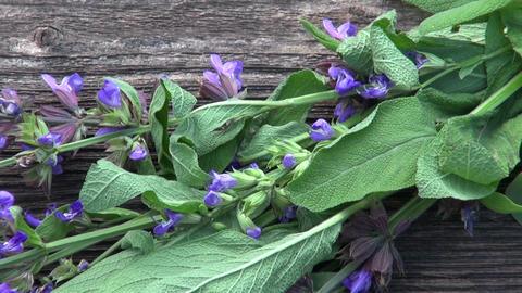 bunch of flowering sage on old wooden background Footage