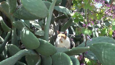 cat in derelict Greece Rhodes island garden Archivo
