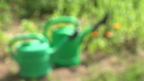 two green watering cans on summer garden flower bed with marigold Footage