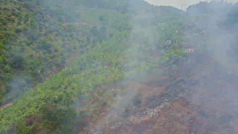 Flycam Removes from Peasant Extinguishing Fire by Banana Field Image