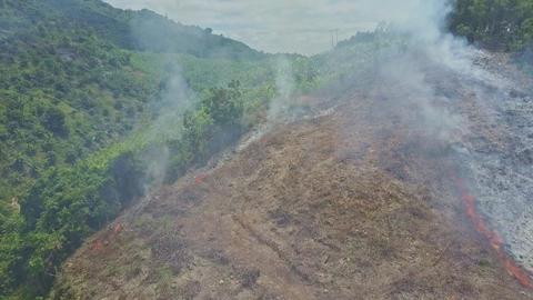 Drone Removes from Burning Land Plot near Banana Plantations Footage
