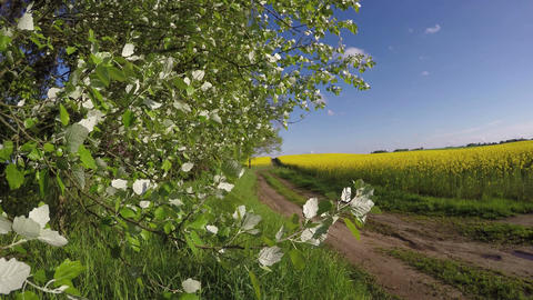 rural road in spring and rapeseed blossoming fields Footage