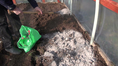 gardener fertilize soil in greenhouse with wood ash Footage