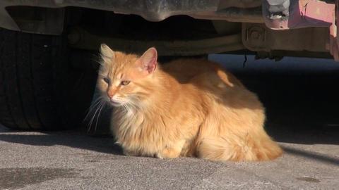 cat rest lying in sunlight near car Stock Video Footage