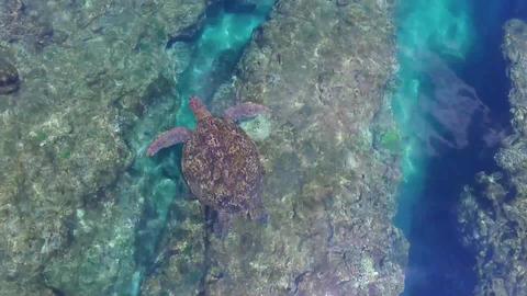 Turtles Footage