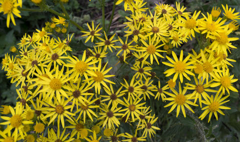 beautiful yellow flowers フォト