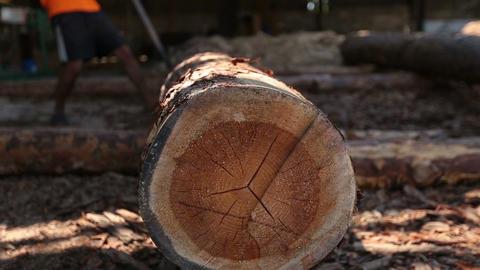 Massive wooden trunk rolling at sawmill ビデオ