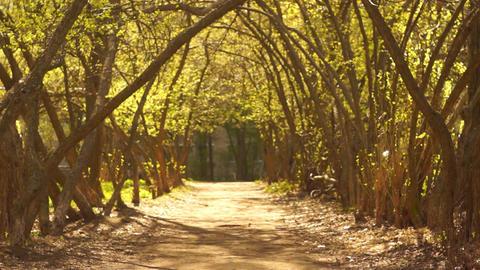 Mystical Spring Alley Footage